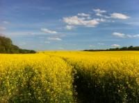 agriculture_adapt_cc_ua
