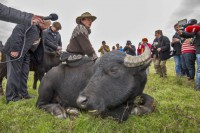 buffalo-ok-430x287